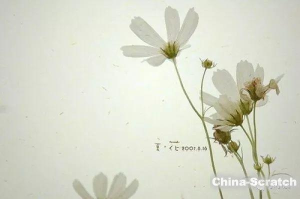 https://cdn.china-scratch.com/timg/191205/1146424061-2.jpg